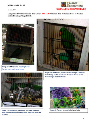 MEDIA RELEASE Bird Breeders and Bird Groups Breach Code of Practice for the Housing of Caged Birds Final