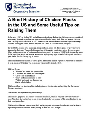 A Brief History of Chicken Flocks in the US and Some Useful Tips on Raising Them